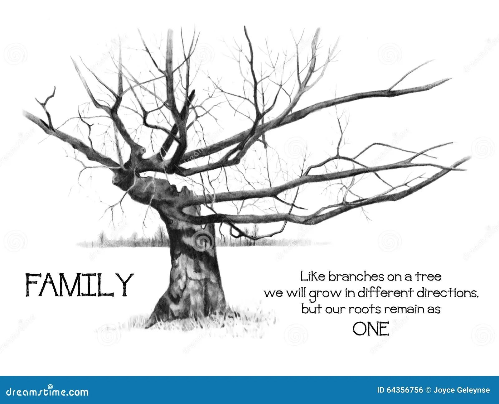 Raices De La Familia Con El Arbol Gnarly Dibujo De Lapiz