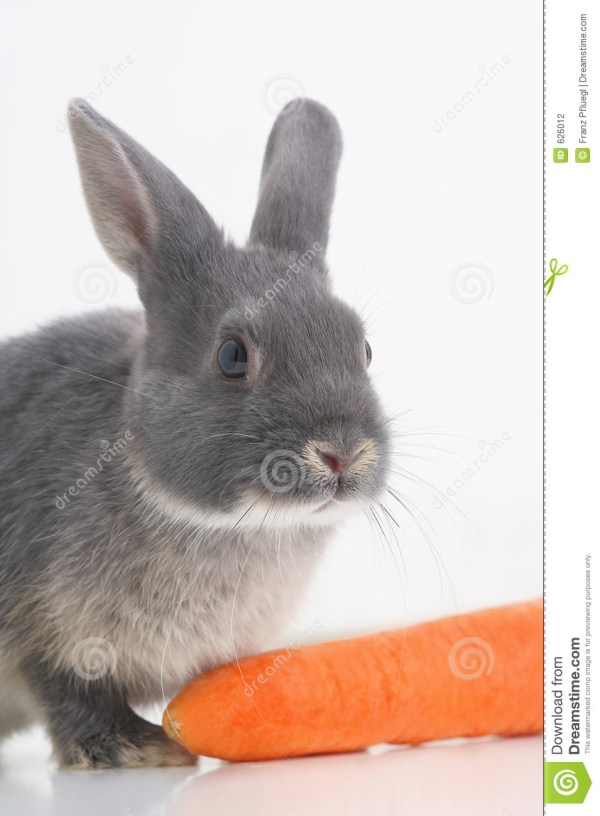 Rabbit Coney Stock Photography Image 626012