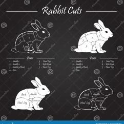 Rabbit Skeleton Diagram Freightliner Business Class M2 Wiring Diagrams The Cartoon Vector Cartoondealer