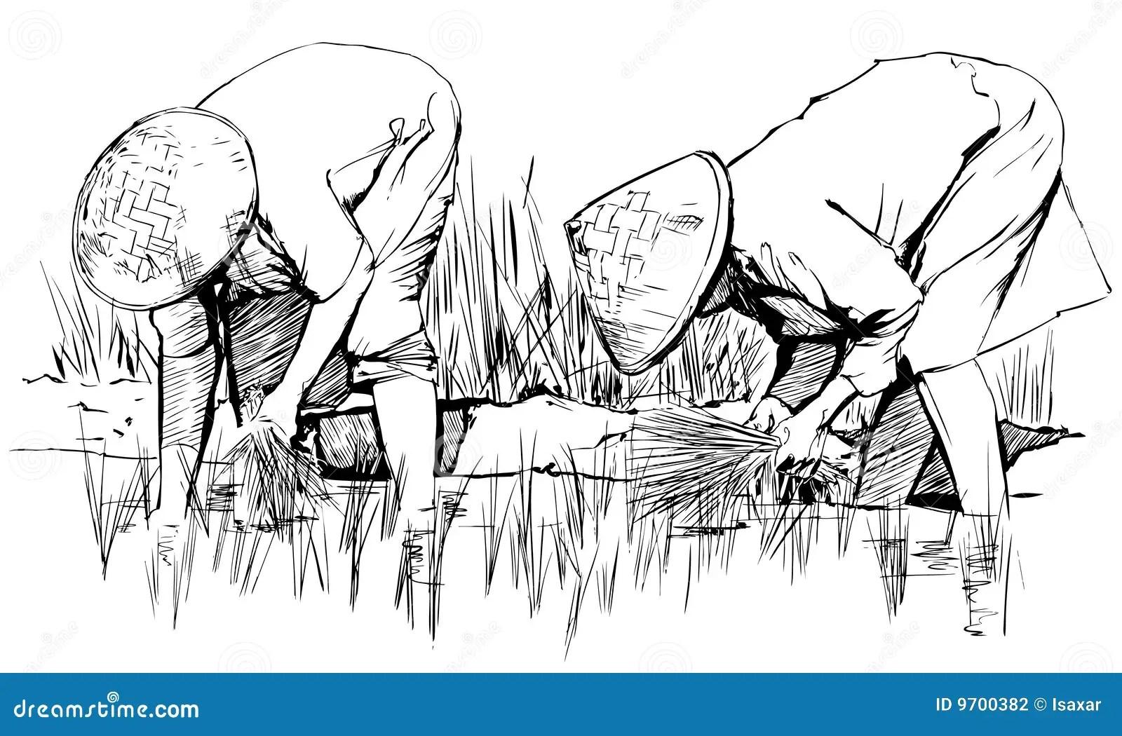 Raccolta Del Riso In Asia Illustrazione Vettoriale
