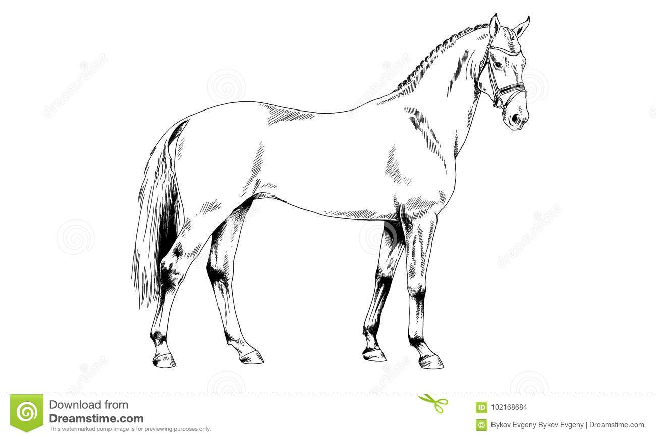 Harness Stock Illustrations 2 337 Harness Stock