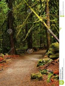 Path in the Rain Forest