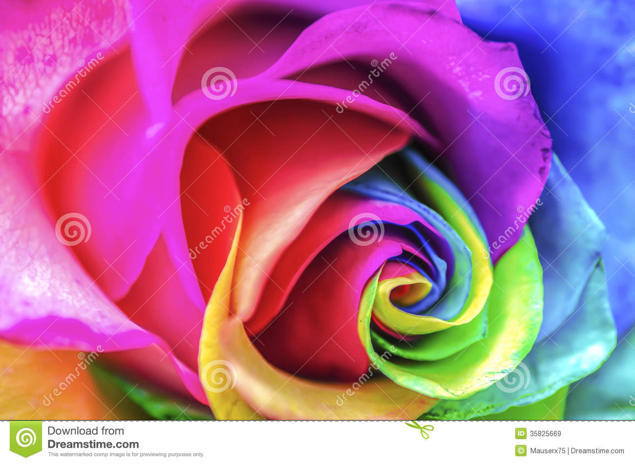 Rainbow Flower Close Up Royalty Free Stock Images Image