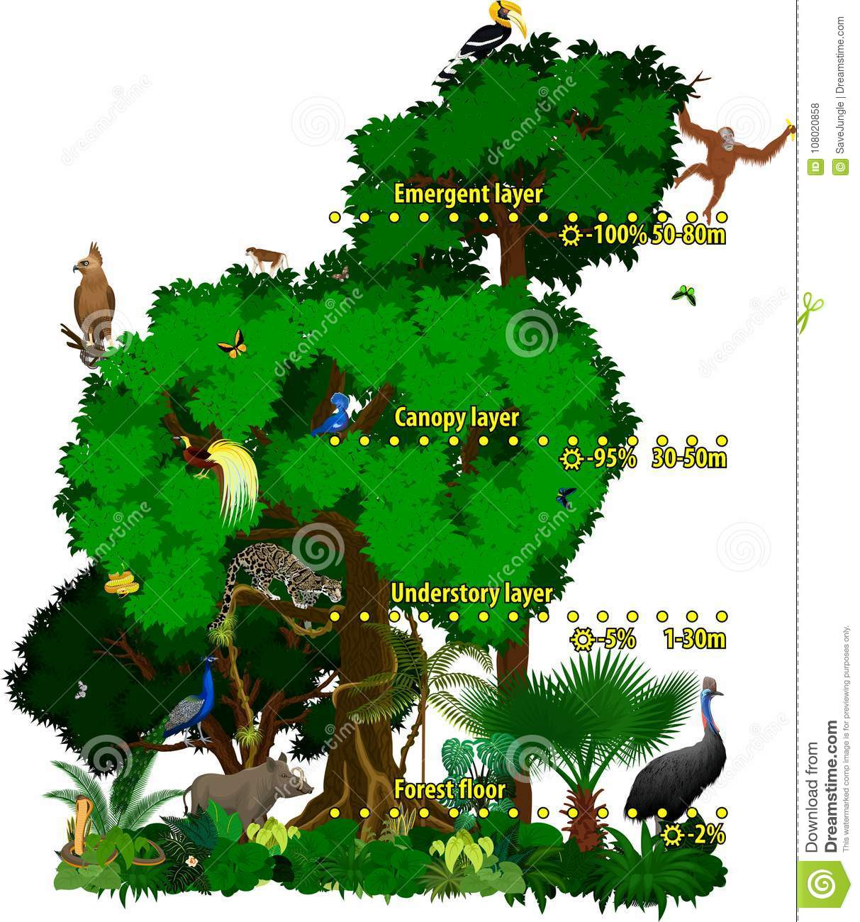 Rainforest Indonesian Jungle Layers Vector Illustration Stock Vector