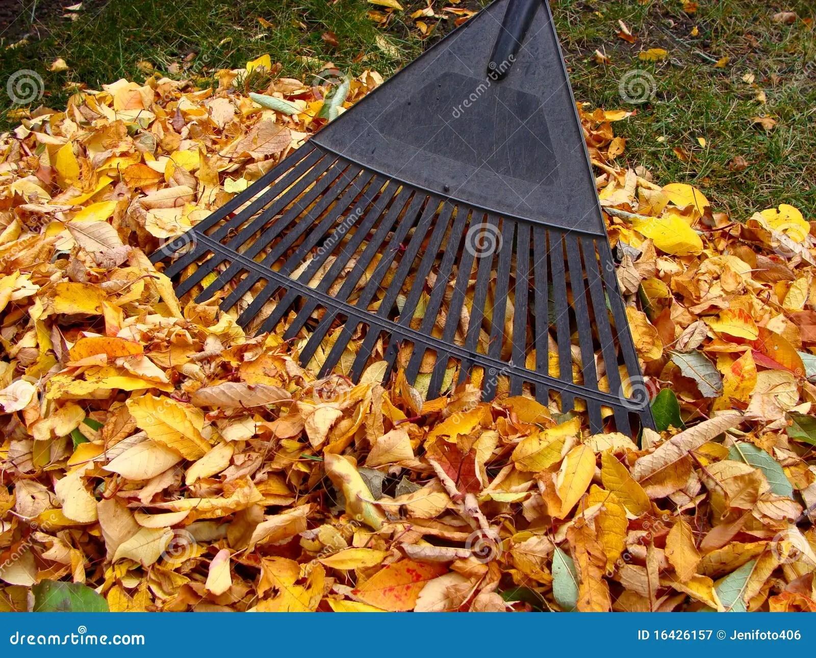 Autumn Tree Leaf Fall Animated Wallpaper Raking Autumn Leaves Royalty Free Stock Photography