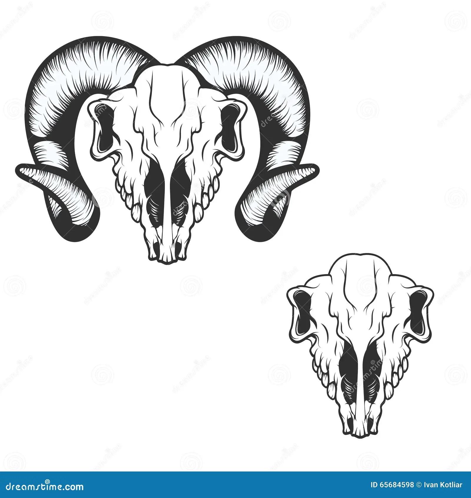 Ram Skull Vector Illustration Stock Vector