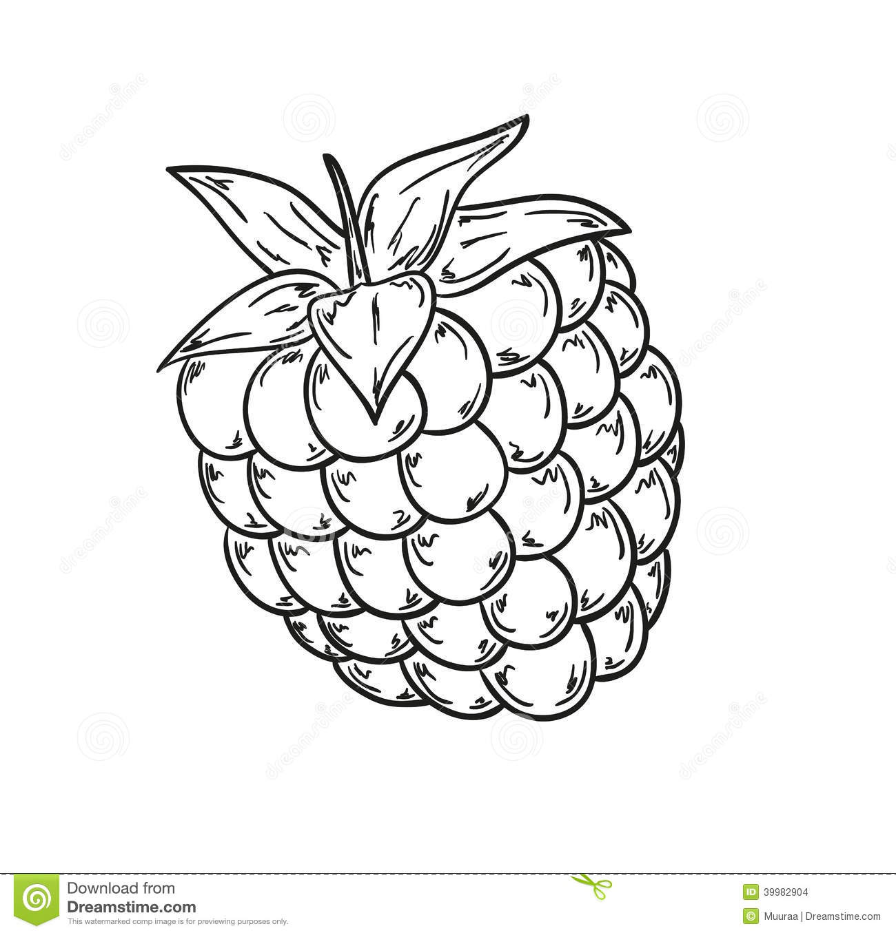 Raspberry Sketch Stock Illustration Image Of Drawn
