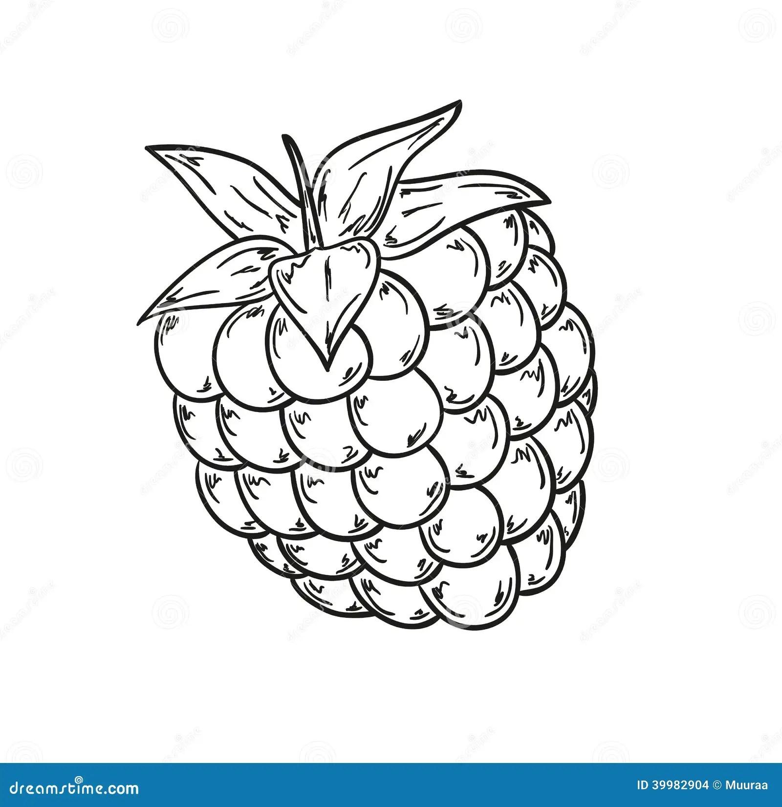 Raspberry Sketch Stock Illustration - Image 39982904