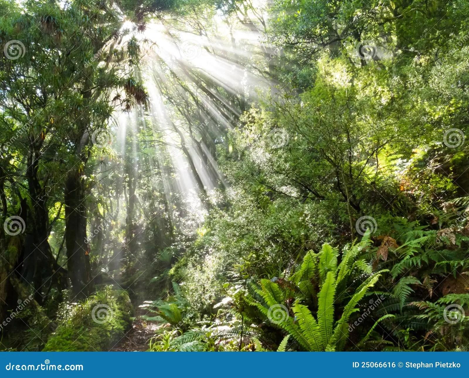 Rays Of Sunlight Beam Trough Dense Tropical Jungle Stock