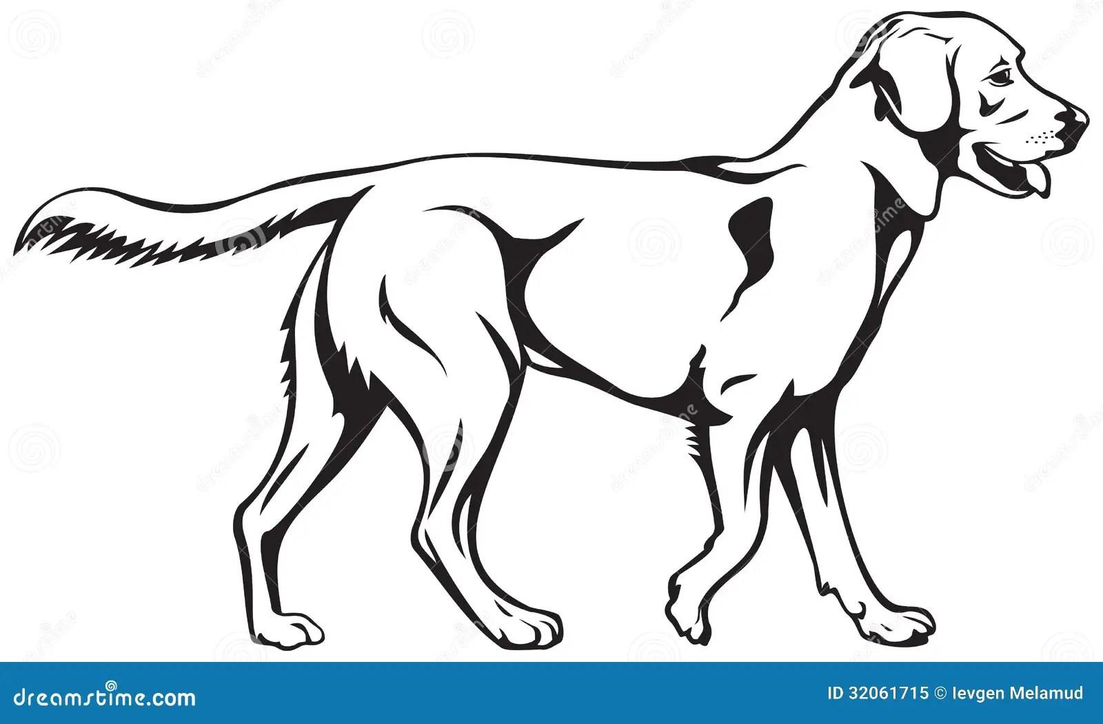 Raza Del Perro Del Labrador Retriever Ilustración del
