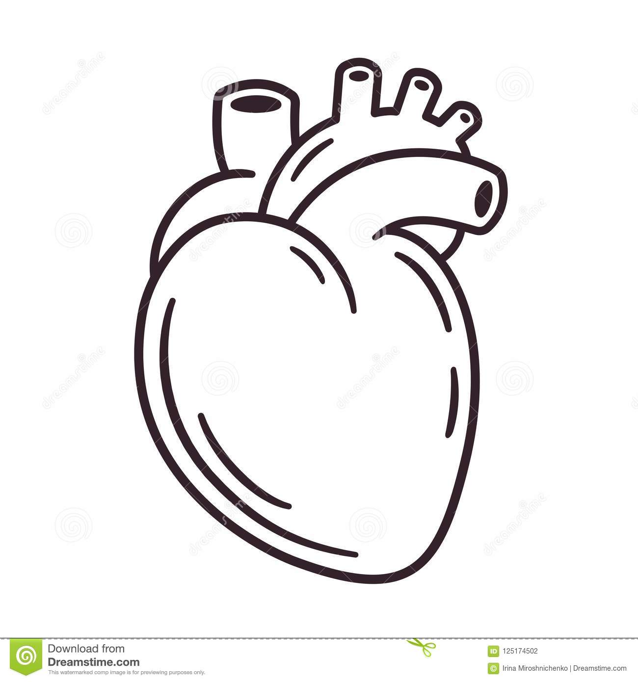 Realistic Heart Drawing Stock Vector Illustration Of