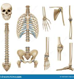 realistic human skeleton parts set with skull spine scapula bones of pelvis and limbs isolated vector illustration [ 1600 x 1550 Pixel ]