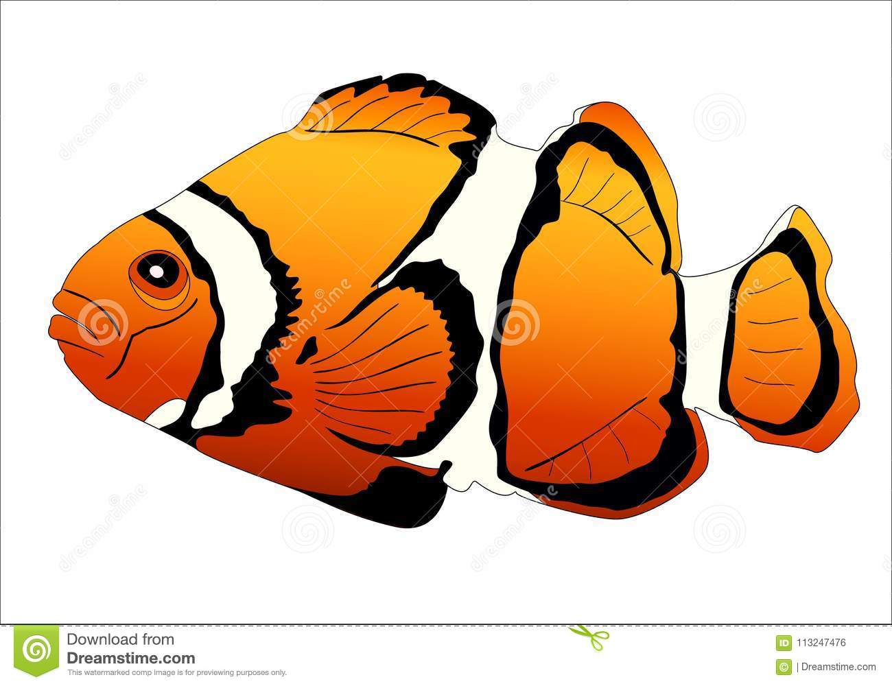 hight resolution of realistic image of sea fish clown on white background