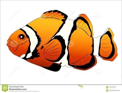 small resolution of realistic image of sea fish clown on white background