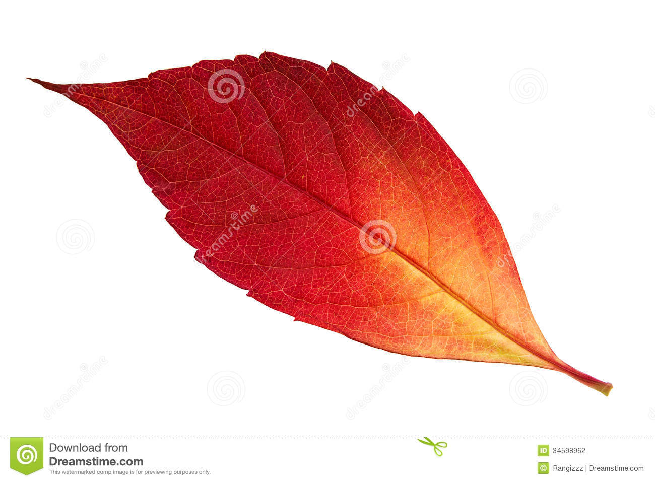red autumn leaf stock