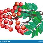 Red Berry Branch With Leaf Stock Vector Illustration Of Decoration 129520331