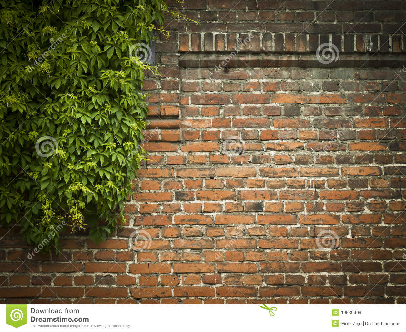 Red Brick Wall With Green Ivy Background Stock Image