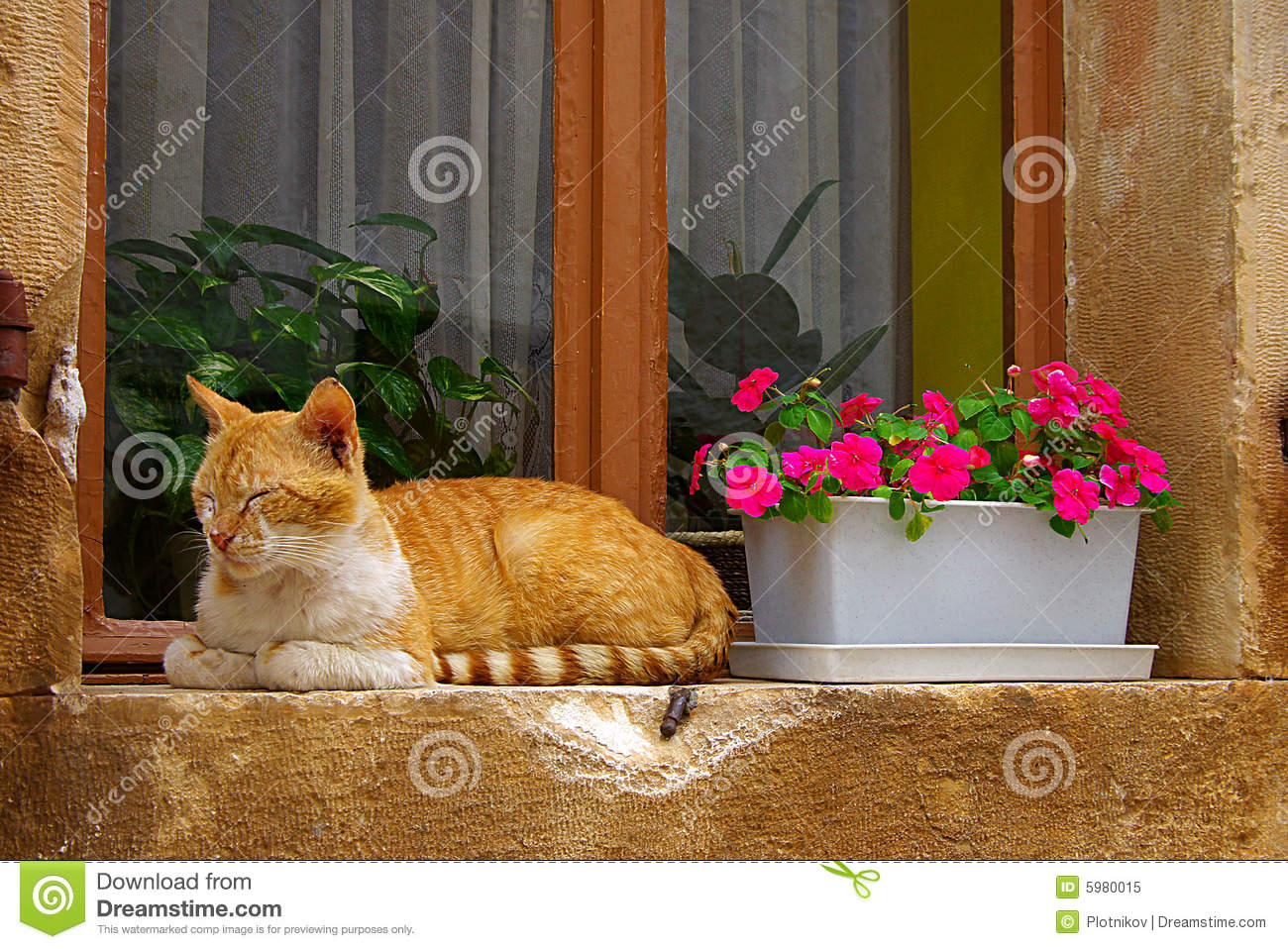 Red Cat On A Window Sill Royalty Free Stock Photo  Image 5980015
