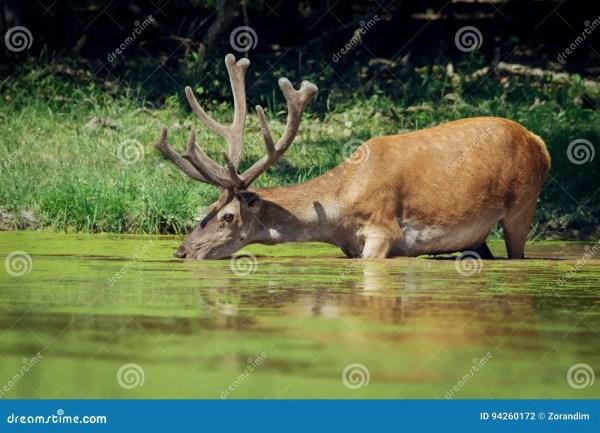 Deer Antlers With Flowers Cartoon Vector #56935961