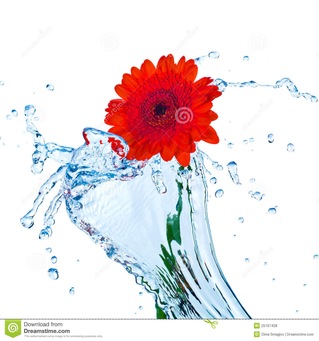 red flower with water