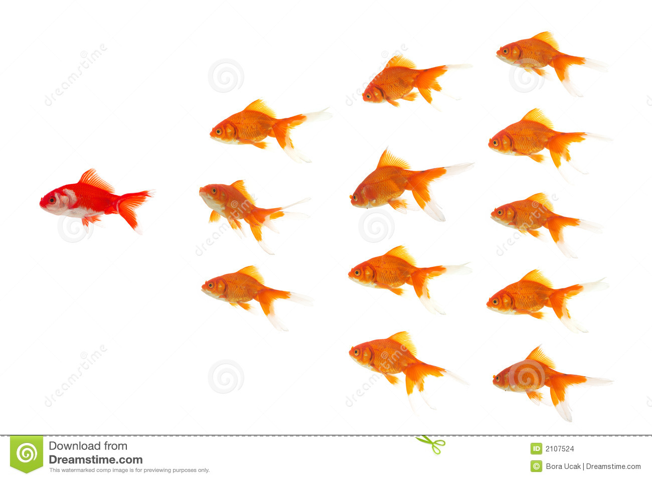 Red goldfish leading stock photo Image of motion glass  2107524