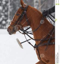 red horse pony head in harness on horse polo [ 1065 x 1300 Pixel ]