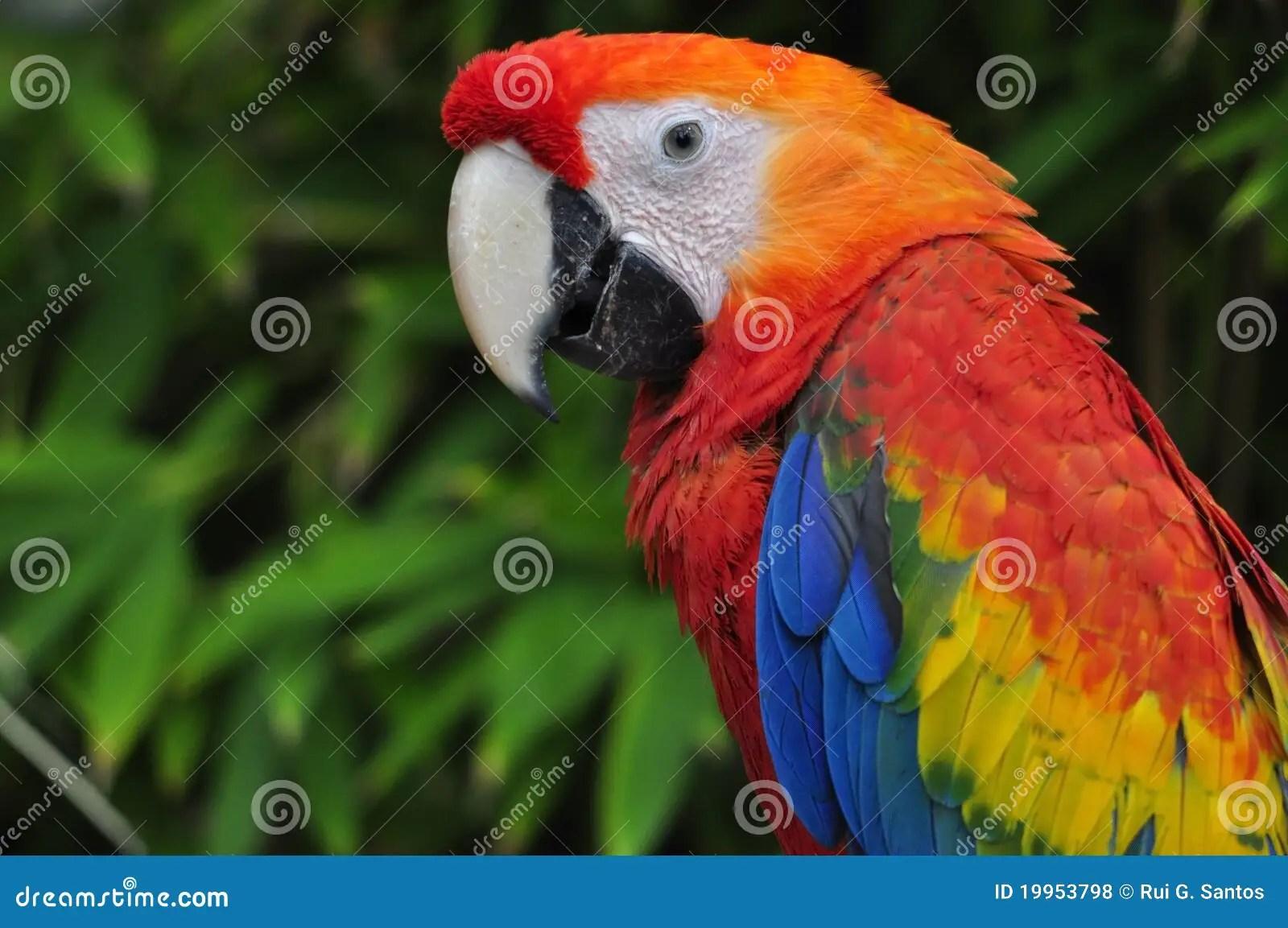 Red Animal Print Wallpaper Red Parrot Stock Photo Image Of Parrot Animal Bird