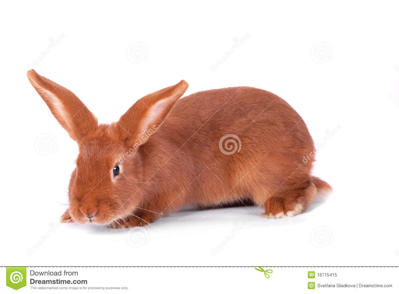 The Red Rabbit Stock Image Image Of White Smooth