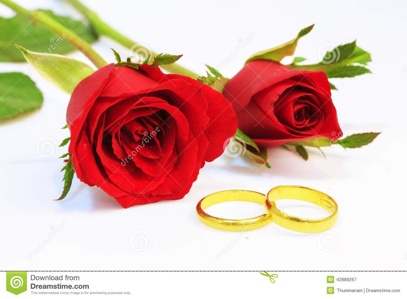 Red Rose And Wedding Rings Stock Photo  Image 42889267