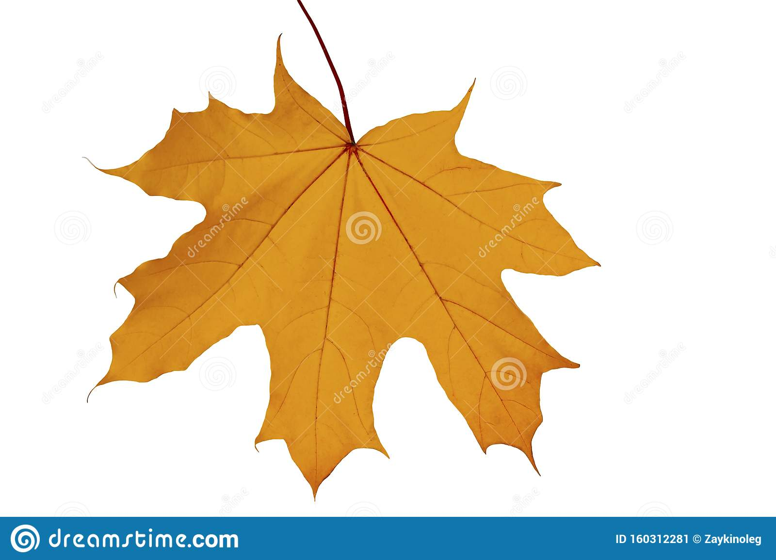 Red Yellow Maple Leaf On A White Background Stock Image