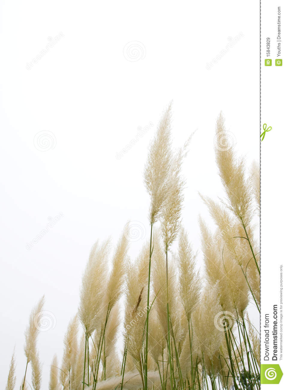 Autumn Leaf Fall Wallpaper Reed Flowers Royalty Free Stock Images Image 15843829