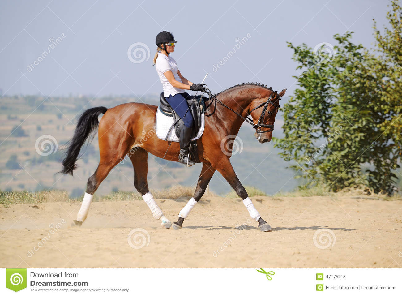 Rider On Bay Dressage Horse Going Trot Stock Image  Image of sport show 47175215