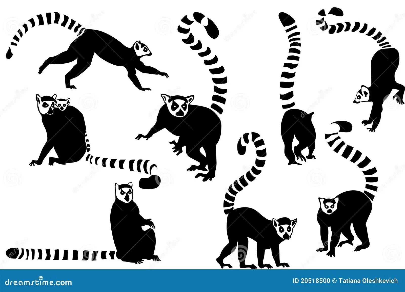Ring Tailed Lemurs Collage Stock Illustration