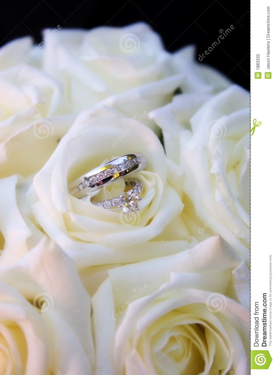 Rings in white roses stock image Image of ring relation