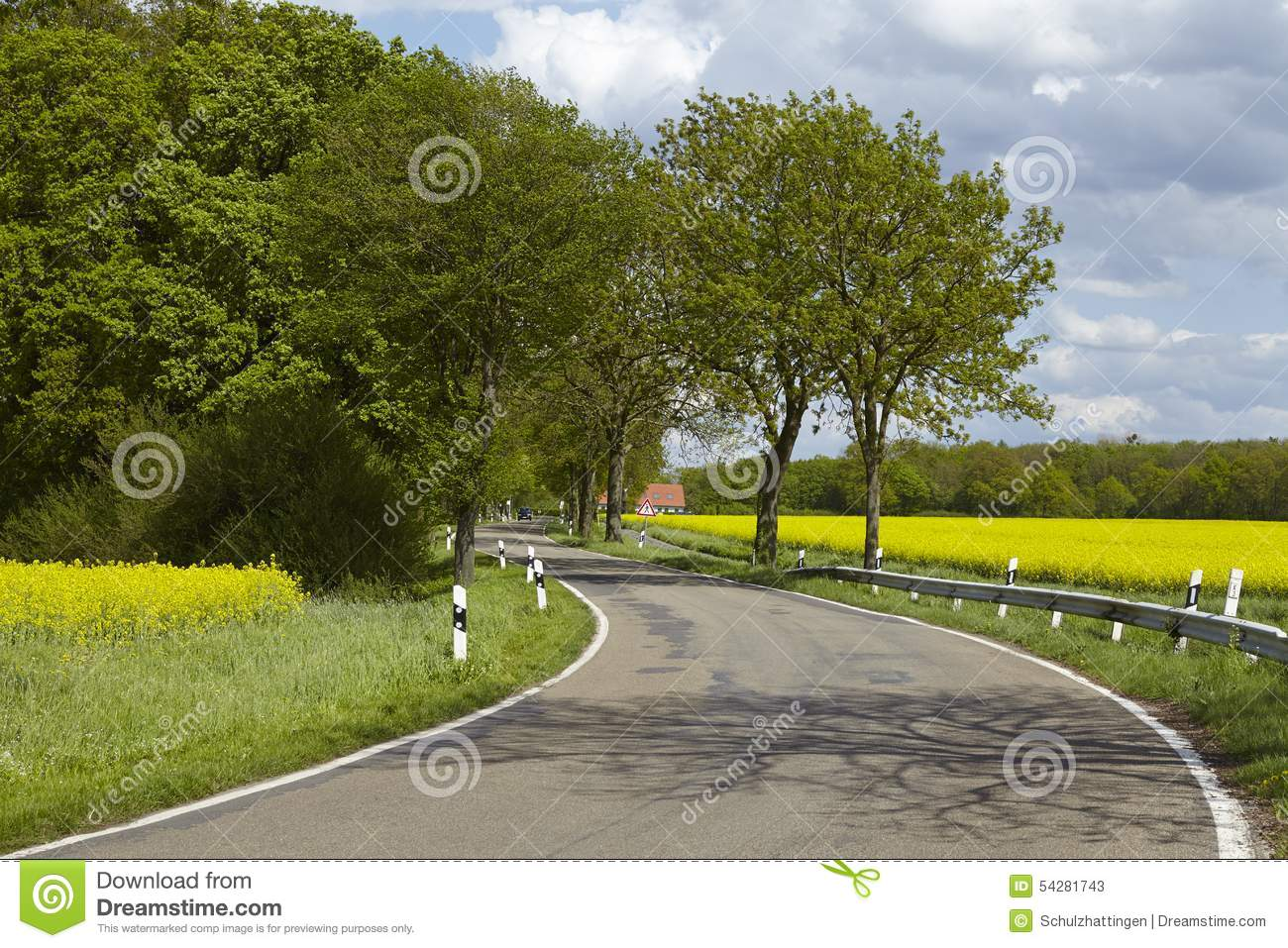 Road With Trees And A Blossoming Yellow Colza Field Stock
