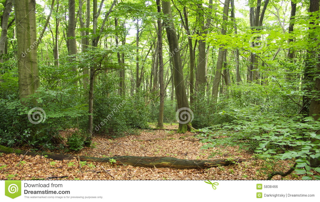 Fall Woods Wallpaper Romantic Forest Royalty Free Stock Image Image 5838466