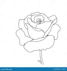 outline rose flower
