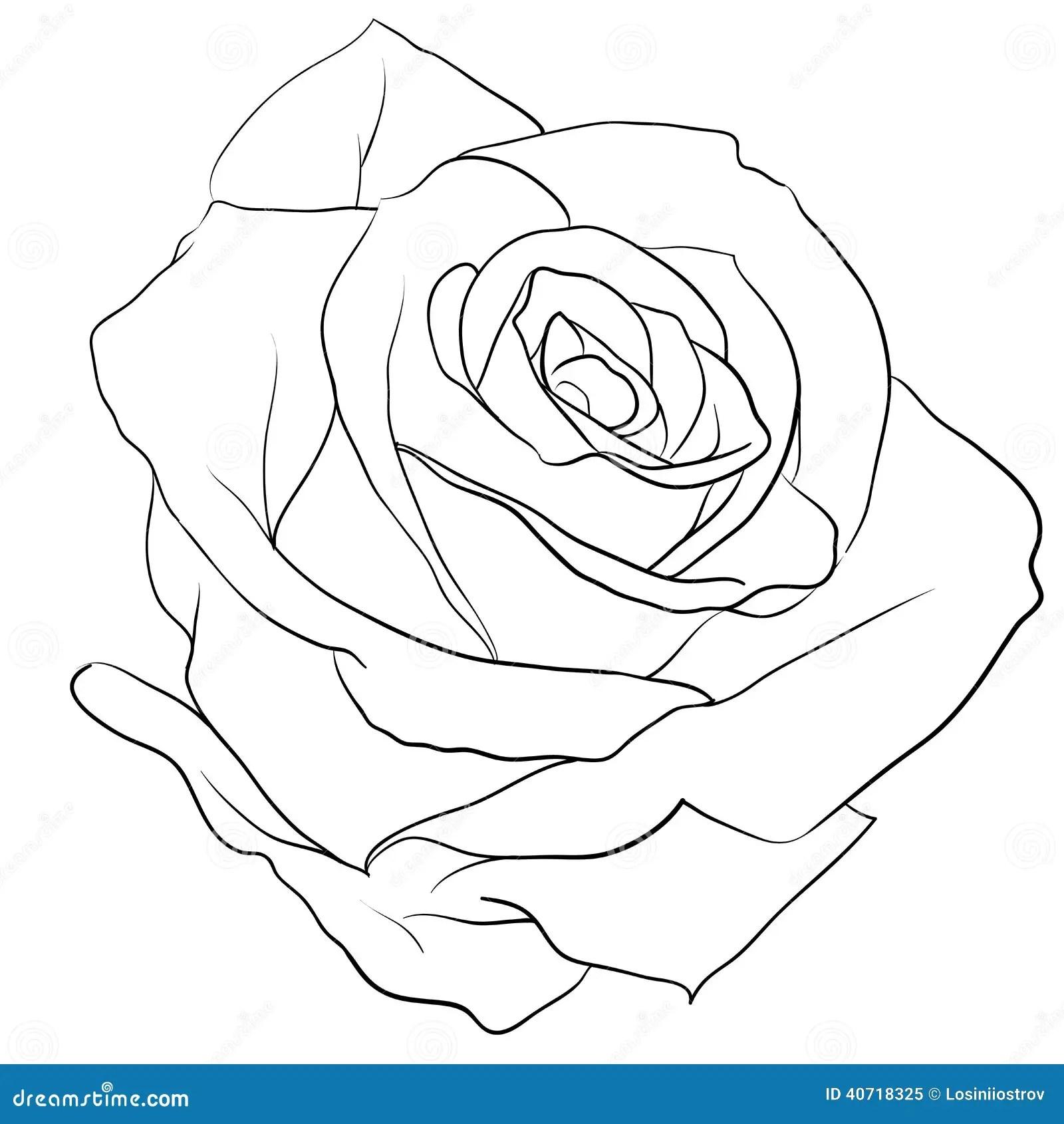 Rosebud stock vector. Illustration of black, beauty