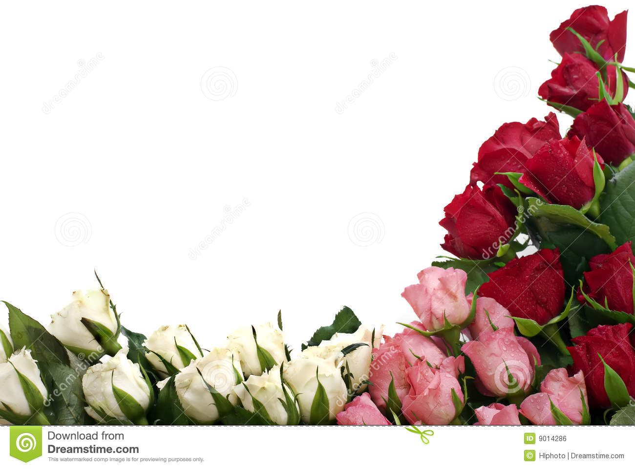 Roses at the Corner stock photo Image of passion love