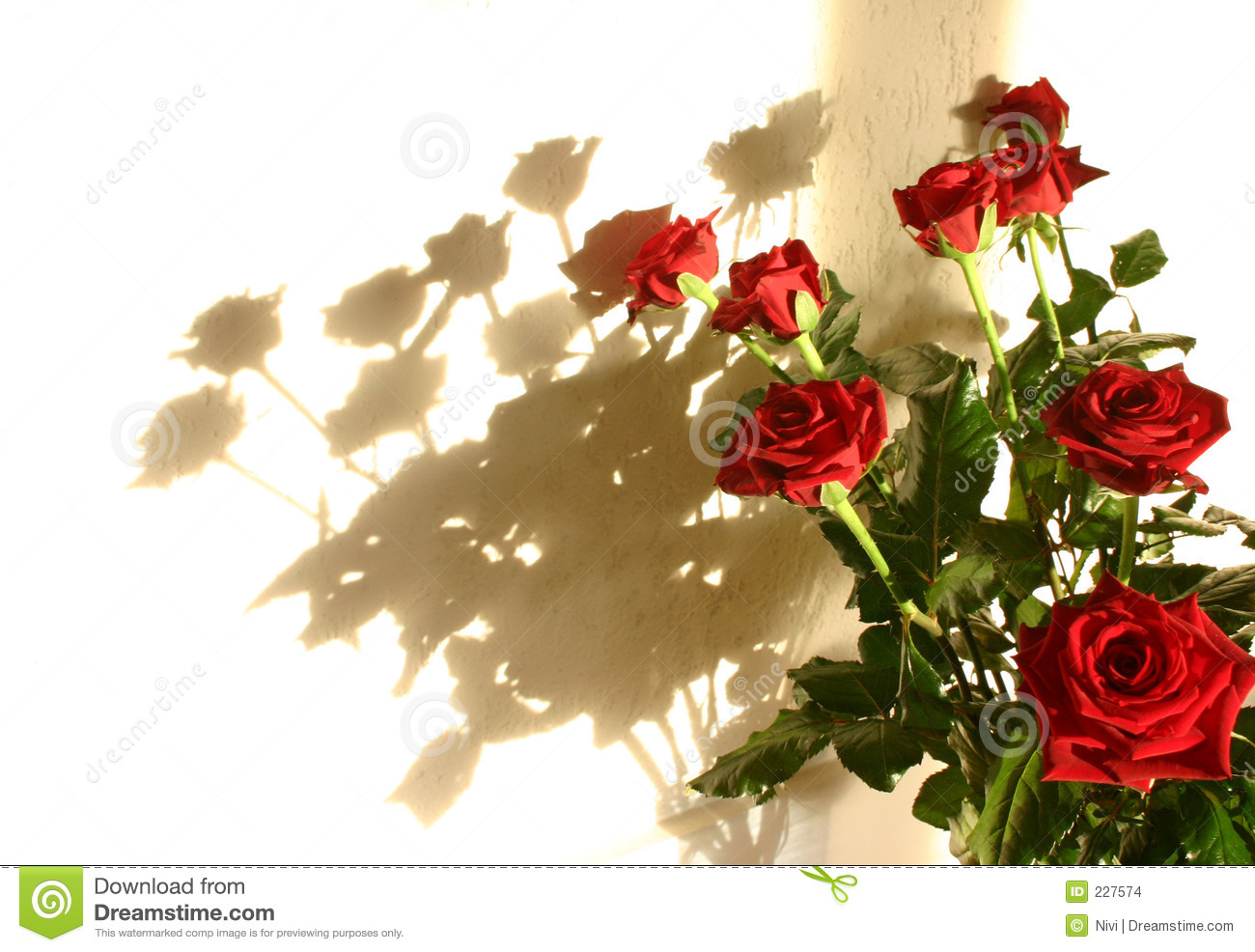 Roses Shadow Stock Images  Image 227574