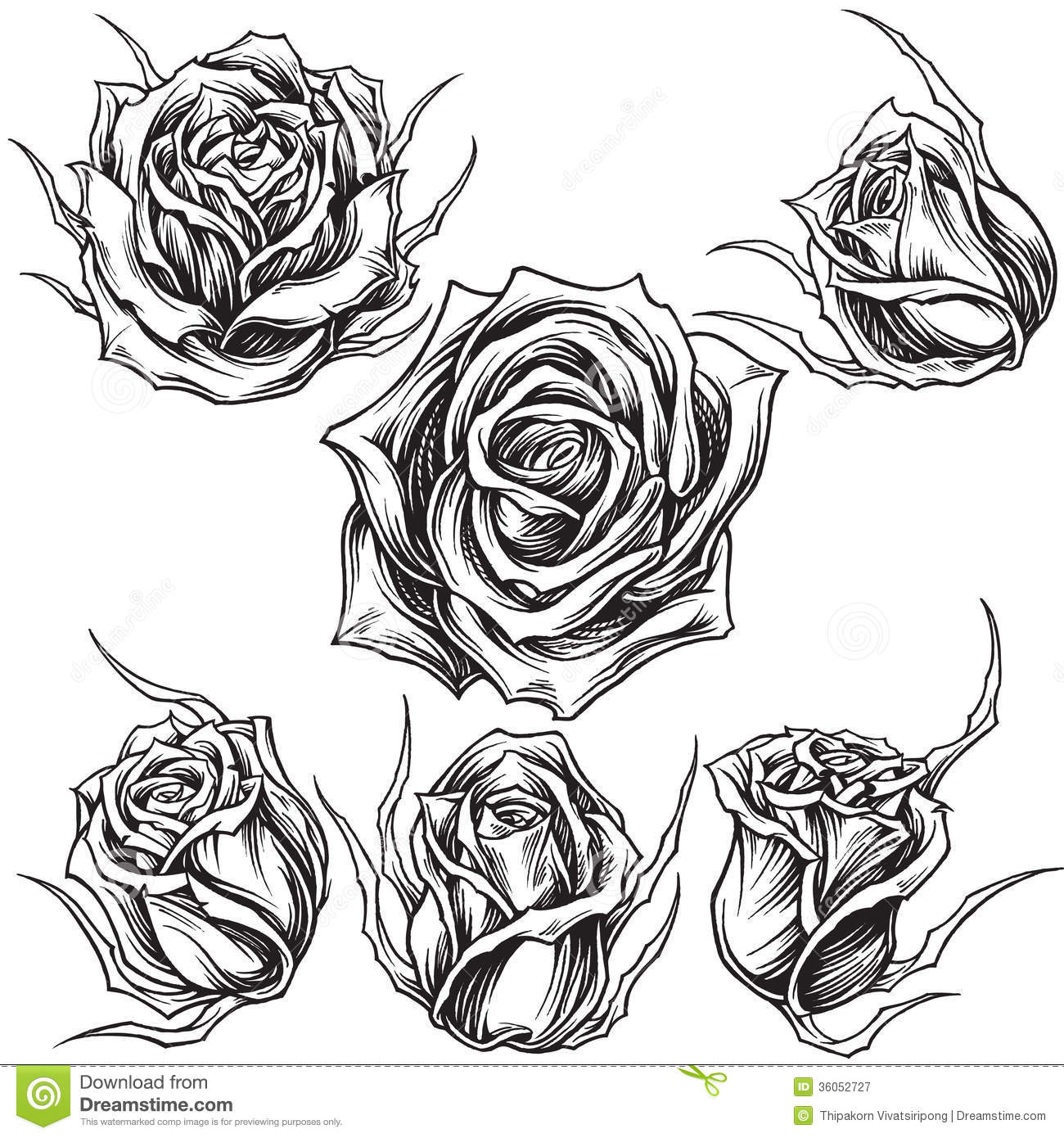 Roses Vector Set 01 Stock Vector Image Of Draw Flowers