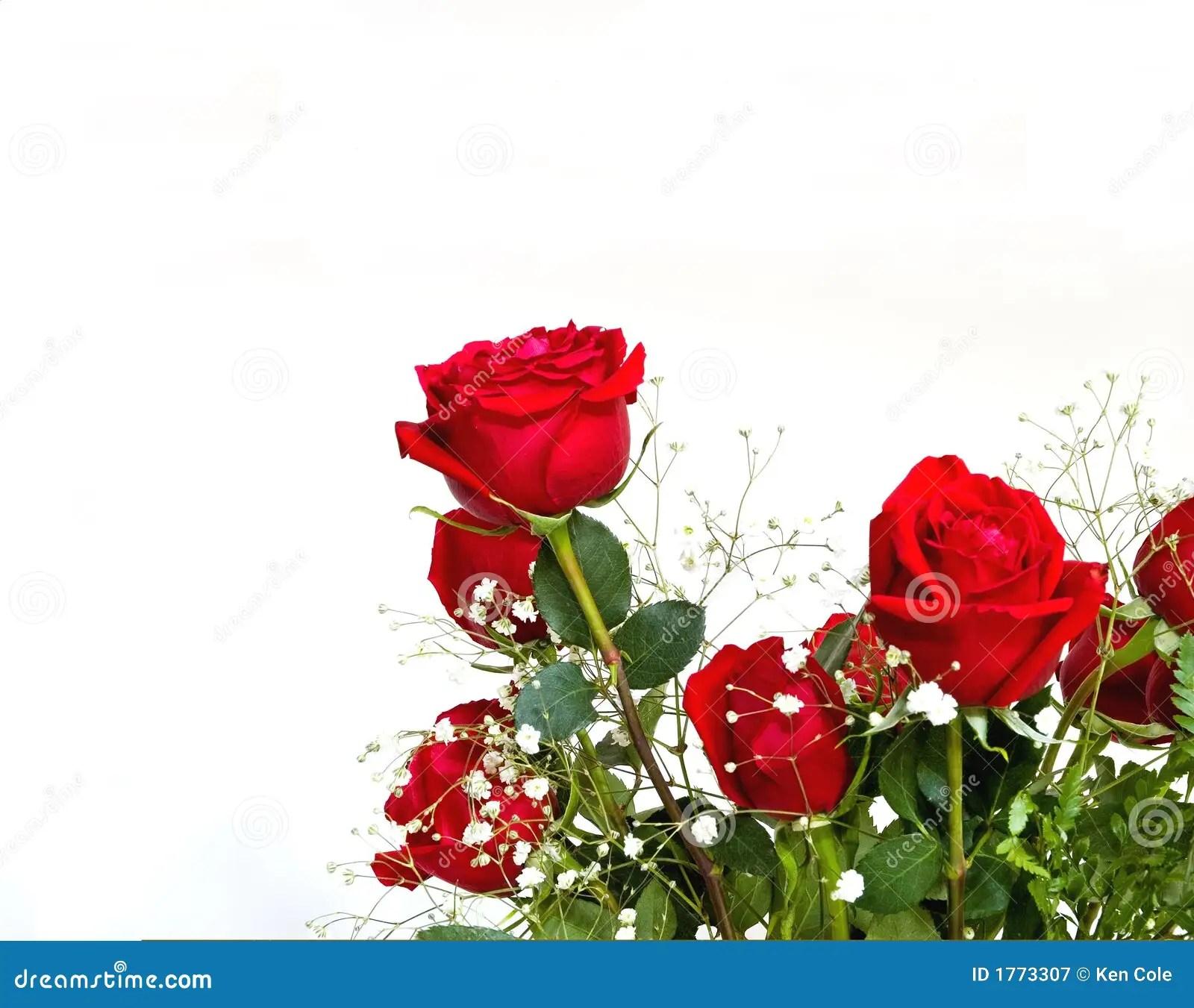 Rote Rosen mit TextPlatz stockbild Bild von liebevoll