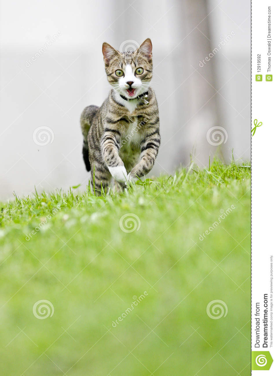 Running Cat Stock Photo Image Of Plant Head Outdoor