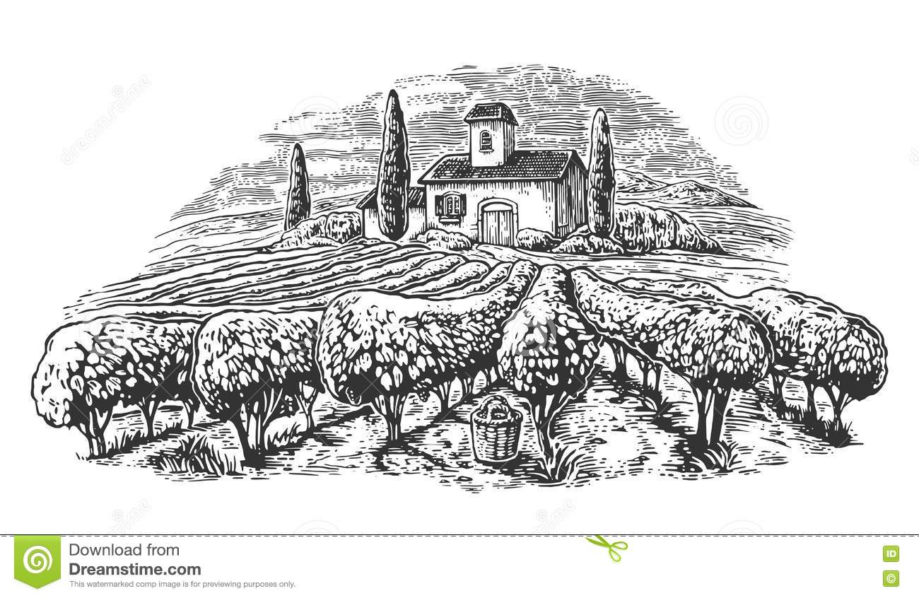 Rural Landscape With Villa Vineyard Fields And Hills