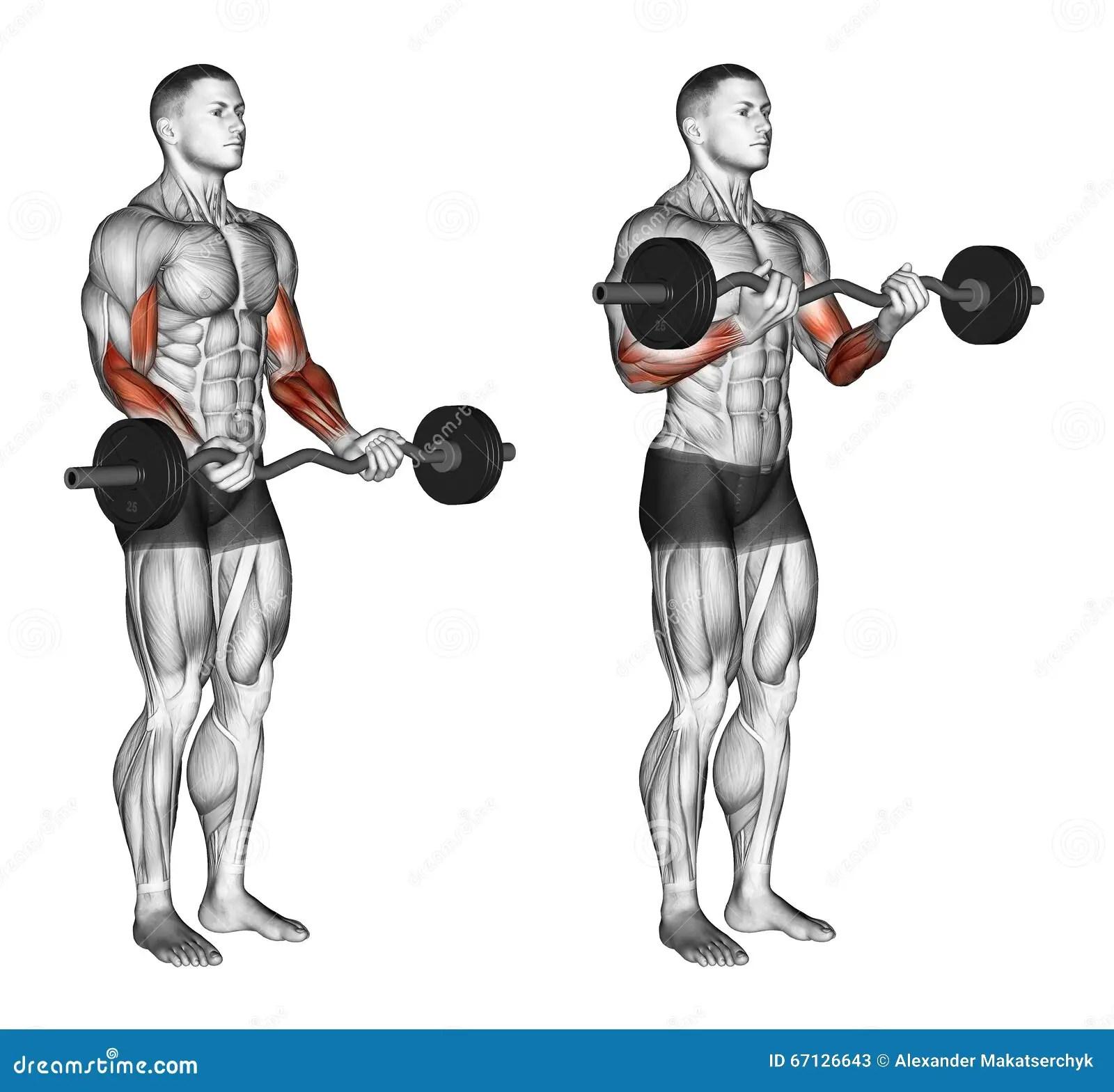 S Exercer Boucles De Barre D Ez Illustration Stock