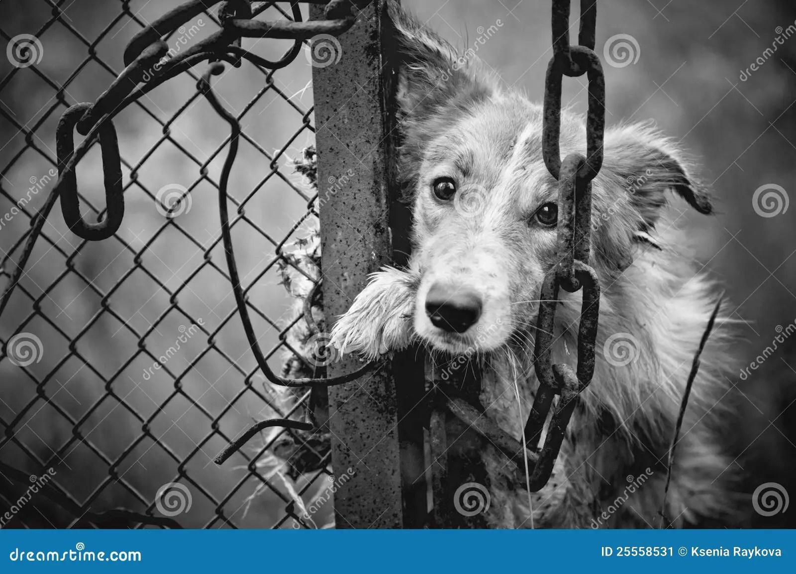 Animal Print Wallpaper Border Sad Dog Black And White Stock Image Image Of Cage Fear