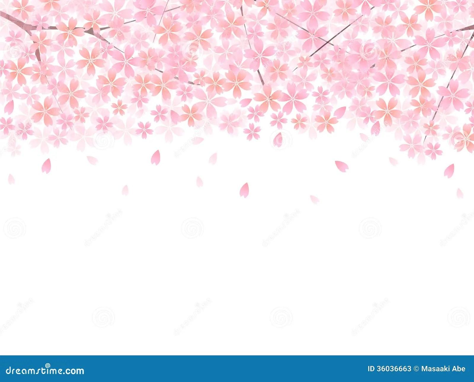 Falling Cherry Blossom Wallpaper Hd Sakura Sakura Spring Stock Vector Illustration Of Plant