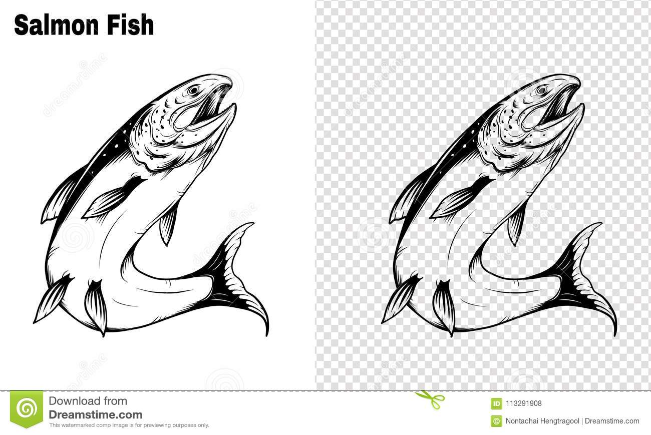 Salmon Art Highly Detailed In Line Art Style.Fish Vector