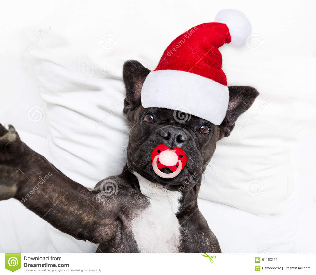 Santa Claus Selfie Dog Stock Photo Image 61163311