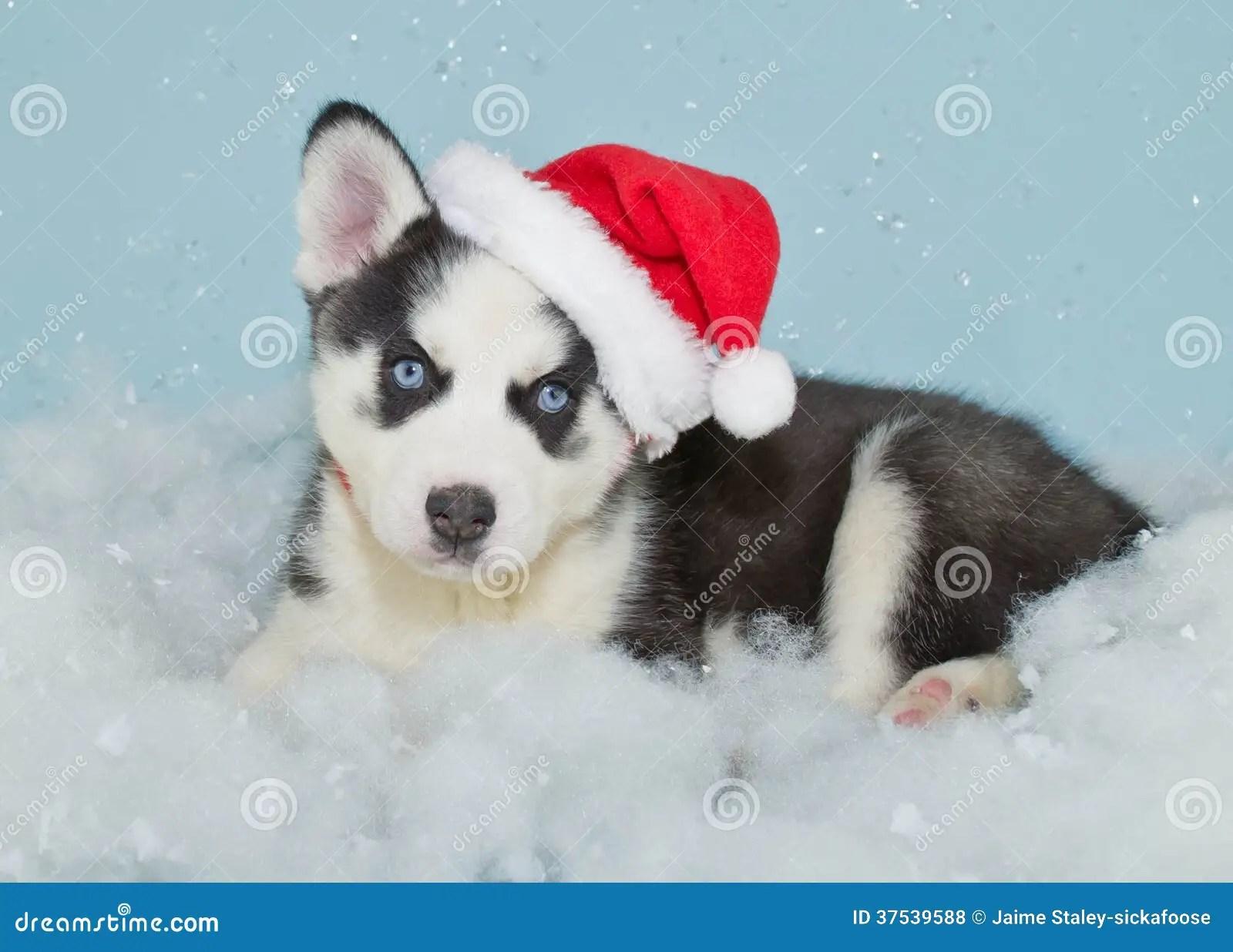 Santa Husky Puppy Royalty Free Stock Photos Image 37539588